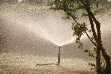 Picture of a water sprinkler