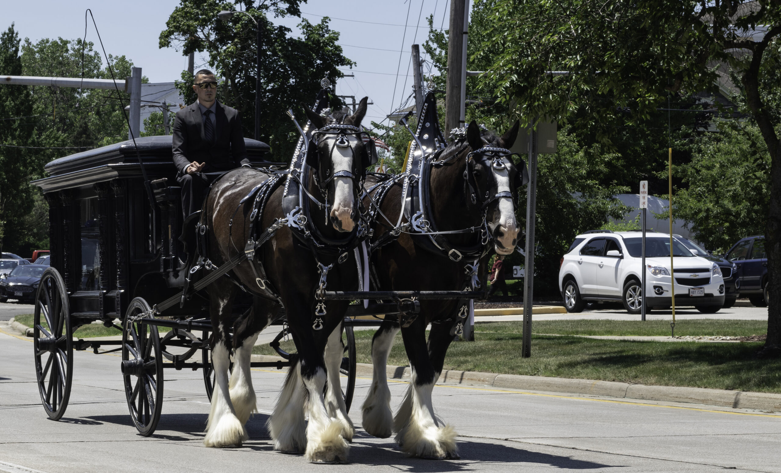 photo of two large identical horses pulling an 1870s hearse. The driver is wearing a black suit and black shirt and sunglasses, his driving crop raised in the air.